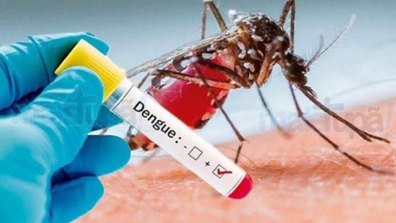 A Dengue Está Voltando. Conheça uma Nova Arma Contra Essa Doença